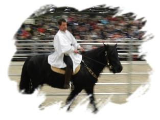 Partner Pferd 2015